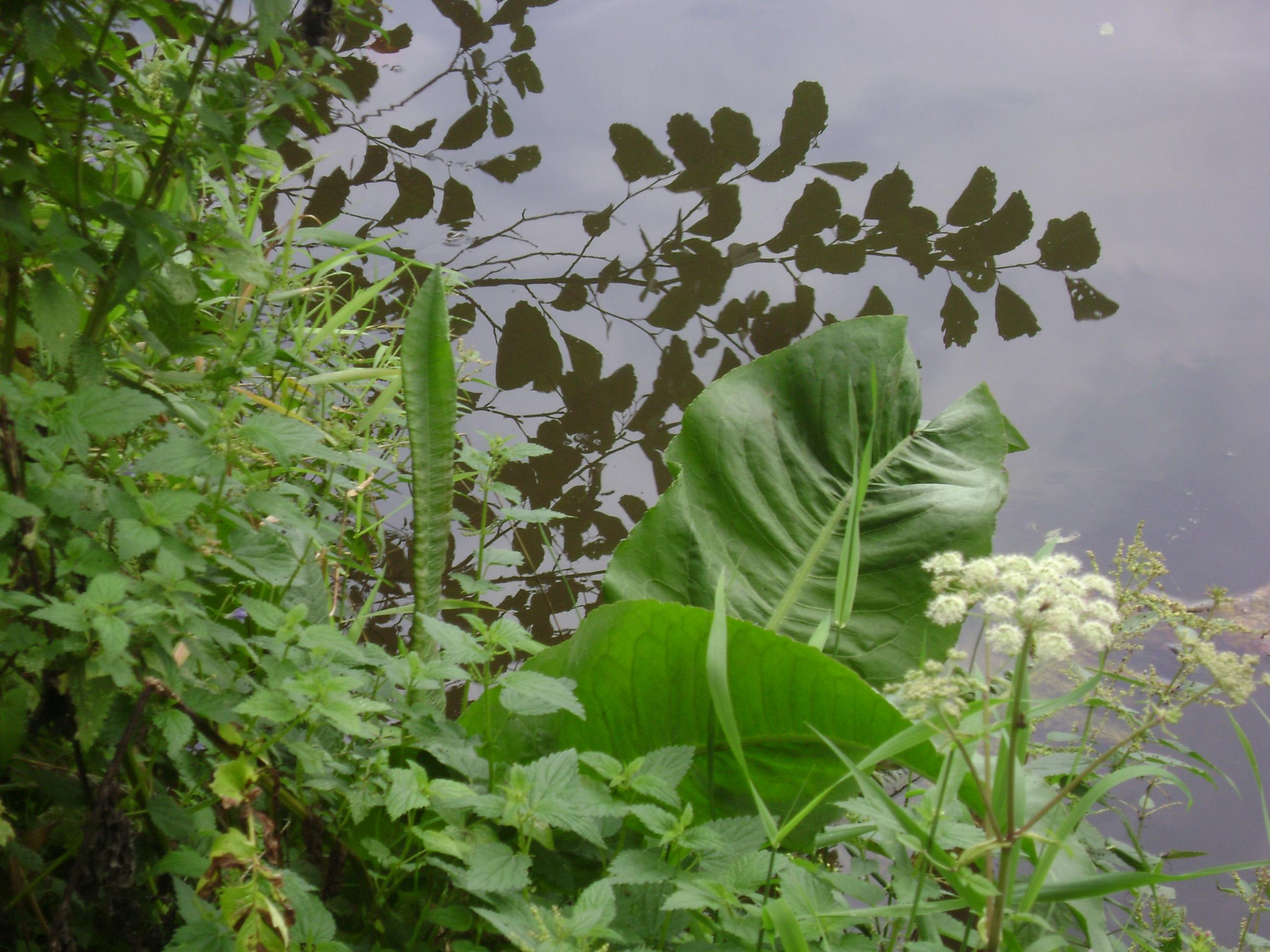 Fleurs du Val de Saône - Abeilles et Petites Mains